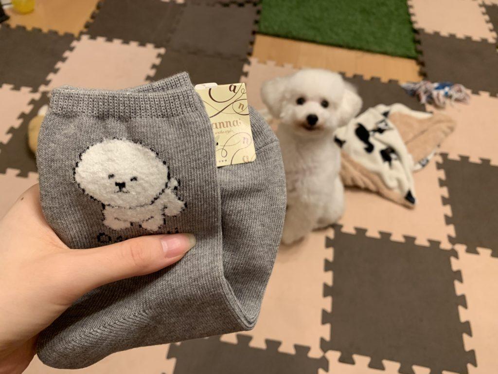 ビションフリーゼの靴下と白いトイプードルの子犬